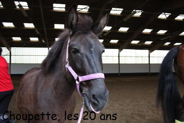 8 ans d'équitation..♥ - Page 7 Img_6848-copie-3e26c21