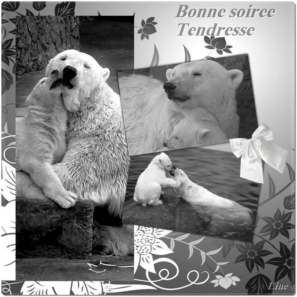 BONNE SOIREE DE MARDI 018b38ce-43afffd