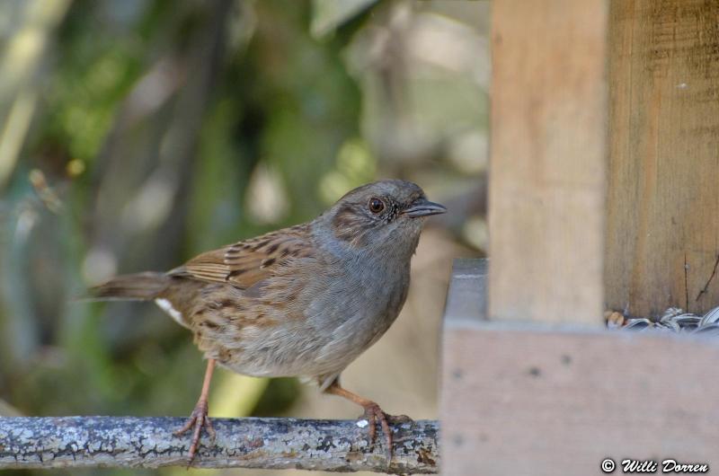 oiseaux de mon jardin Dpp_-oiseaux-3--0013-418ee4e