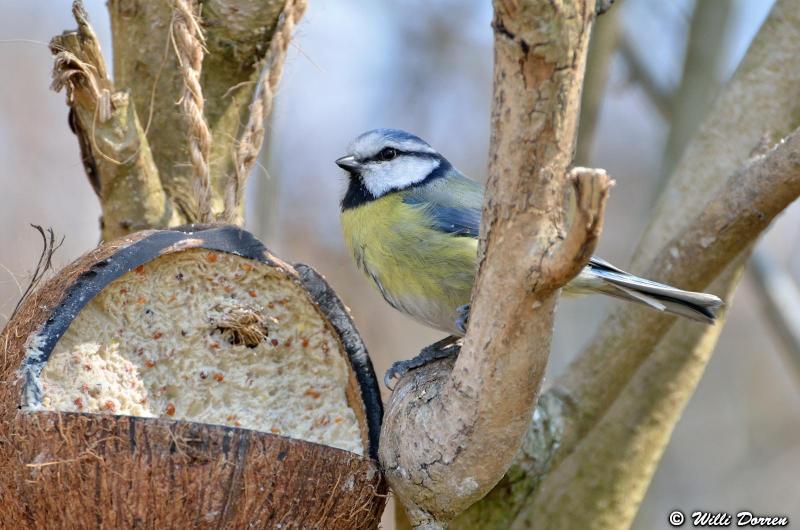 oiseaux de mon jardin Dpp_-oiseaux-3--0007-418ee49