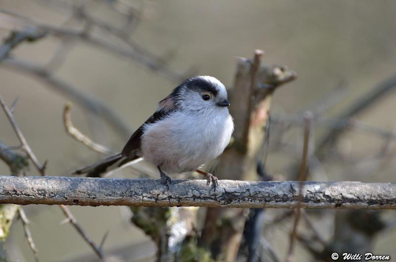 oiseaux de mon jardin Dpp_-oiseaux-3--0022-418ee59
