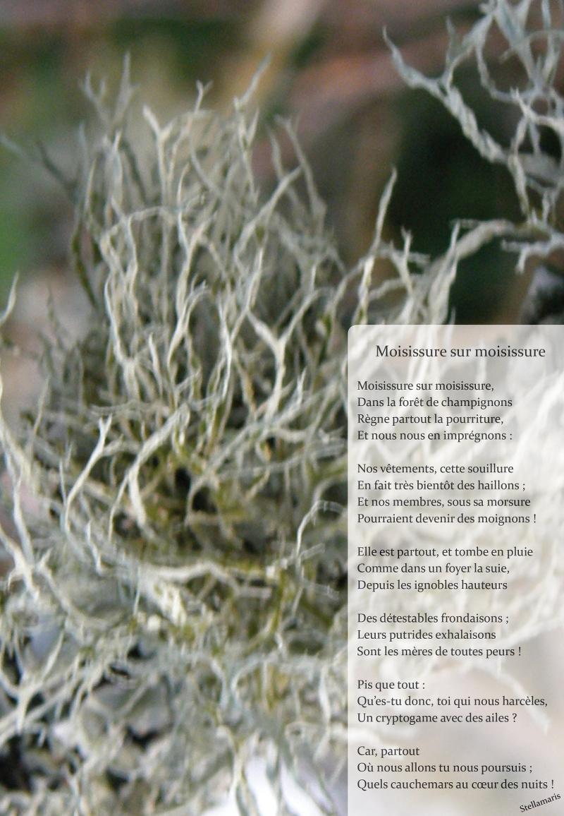 Moisissure sur moisissure / / Moisissure sur moisissure, / Dans la forêt de champignons / Règne partout la pourriture, / Et nous nous en imprégnons : / / Nos vêtements, cette souillure / En fait très bientôt des haillons ; / Et nos membres, sous sa morsure / Pourraient devenir des moignons ! / / Elle est partout, et tombe en pluie / Comme dans un foyer la suie, / Depuis les ignobles hauteurs / Des détestables frondaisons ; / Leurs putrides exhalaisons / Sont les mères de toutes peurs ! / / Pis que tout : / Qu'es-tu donc, toi qui nous harcèles, / Un cryptogame avec des ailes ? / / Car, partout / Où nous allons tu nous poursuis ; / Quels cauchemars au cœur des nuits ! / / Stellamaris