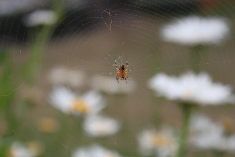 Des araignées Img_2134-1--3fe94ae